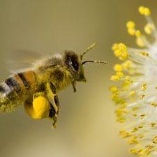 18707988 - flying bee